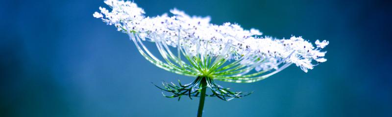 homeopathy fertility boost